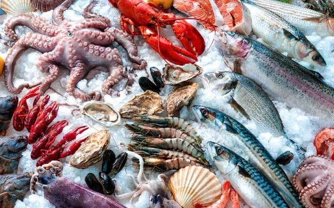 somon hering crap peste creveti ton calamar caracatita de mare